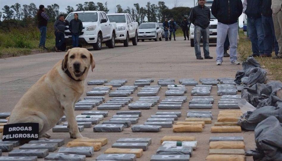 Analizan si la droga incautada  en Las Lajitas es metanfetamina