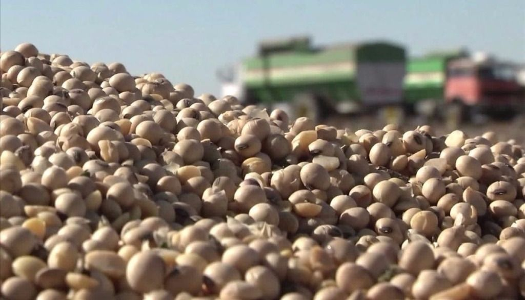 Un 30% de los productores de soja  podrá cobrar el 100% del reintegro
